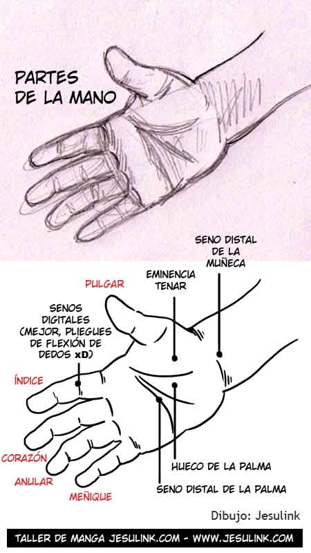 Worksheet. Taller de Manga  Cmo dibujar manos